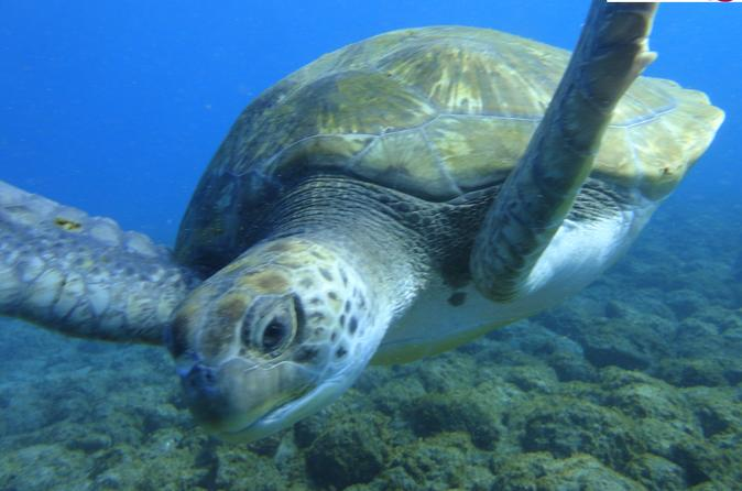 Guided snorkeling with turtles with pictures in tenerife in acantilados de los 355298