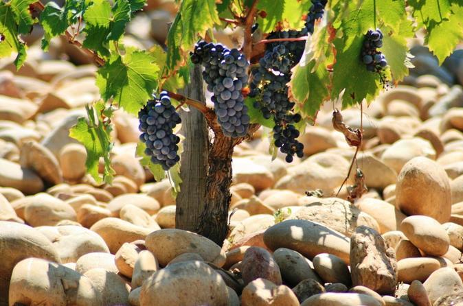 Avignon Food, Wine & Nightlife