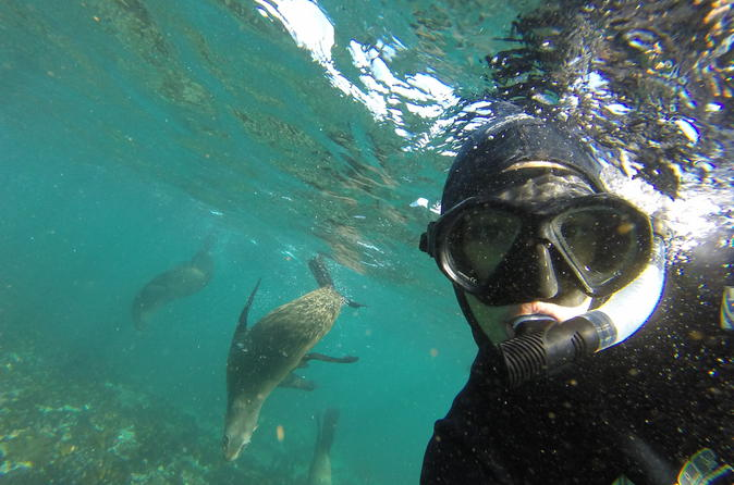 Seal Snorkeling Experience in Cape Town