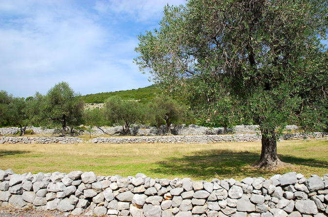 Lustica peninsula organic olive farm private tour and tastings in kotor 343630
