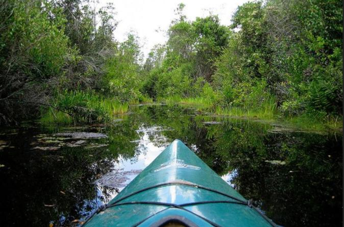 Paddle the Swamp: Canoe and Kayak Louisiana Bayou Tour