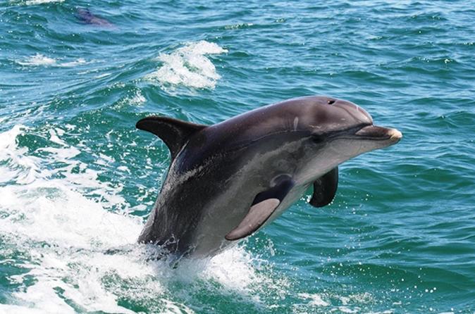 Full-Day Mandurah Dolphins, Chocolate & Fremantle Tour