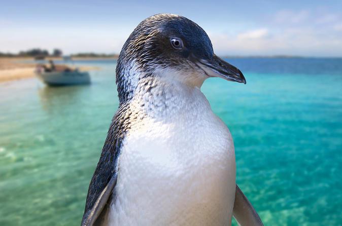 Full-Day Penguin Island & Fremantle Town