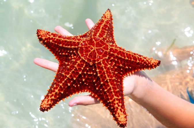 Stingray City And Starfish Beach Tour