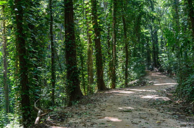 Visit To Udawatte Kele Forest, Kandy From Negombo