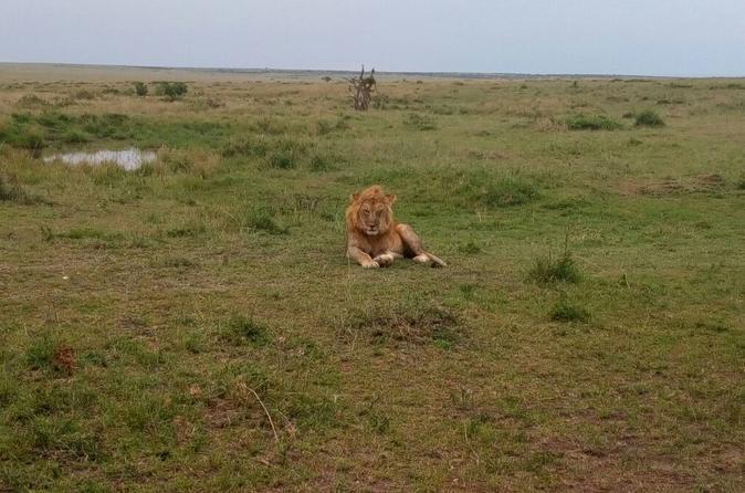 Lake Nakuru National Park Safari From Nairobi