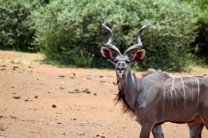 Pilannesburg Game Reserve and Sun City Full Day Tour from Pretoria