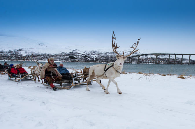 Reindeer Sledding, Lasso Throwing and Sami Culture Including Lunch in Tromso