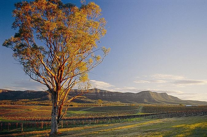 Sydney Combo: Deluxe Hunter Valley Wineries And Wilderness Small-Group Tour Plus Half-Day Sydney Sightseeing Tour