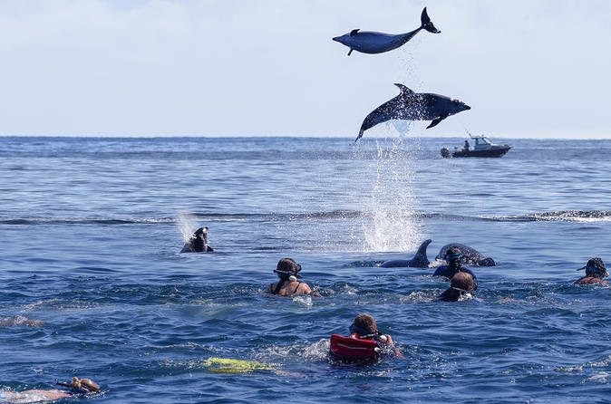 Dolphin Watching Tours Auckland