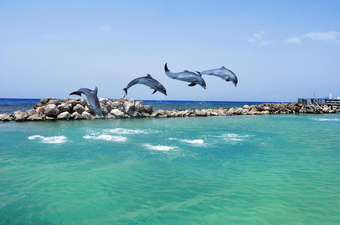 Negril Dolphin Swim Adventure
