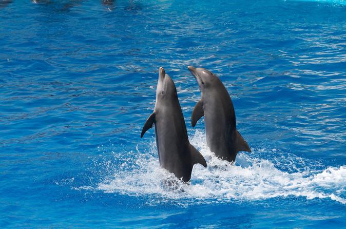 Tortola Dolphin Discovery Swim