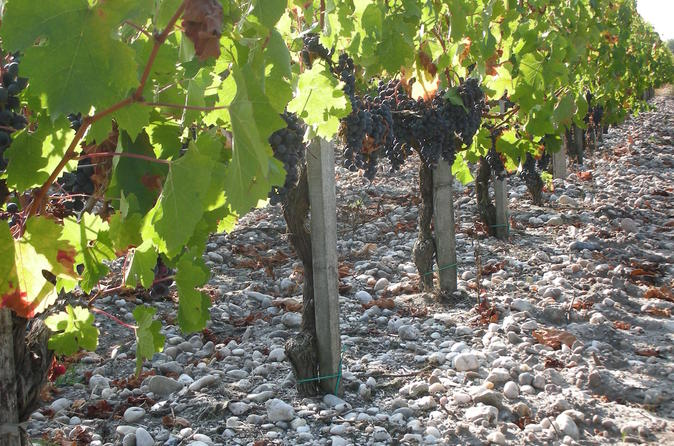 A tour of the vines of ch teau paloumey in the medoc including a wine in ludon m doc 352667