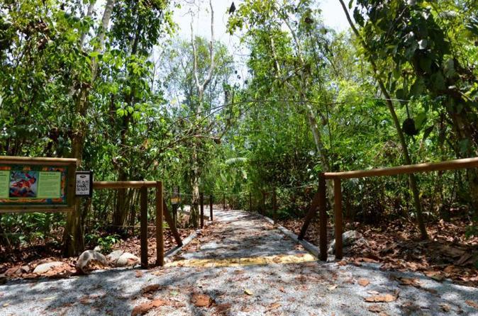 Rain Forest Adventure 3 in 1