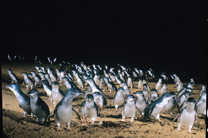Full-Day Penguin Parade and Melbourne City Tour From Melbourne  Australien, Pazifischer Ozean und Australien