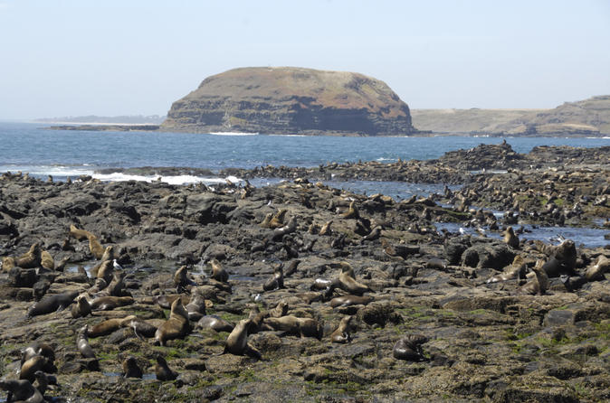Phillip Island Nature Park and Wildlife Seals Cruise