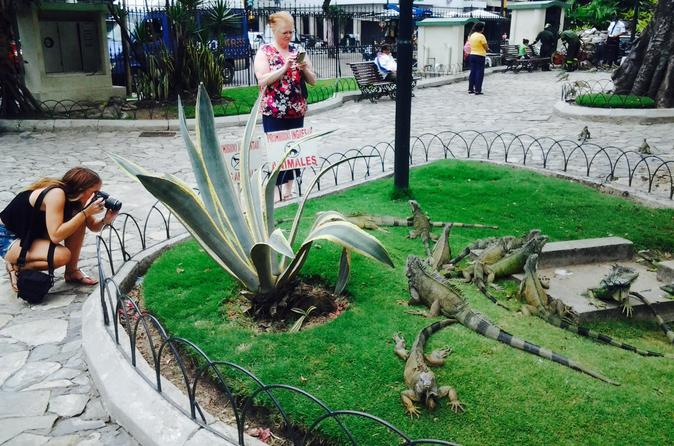 Private half day city tour of guayaquil and historical park in guayaquil 367280