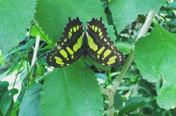 Monteverde butterfly gardens tour in monteverde 358438