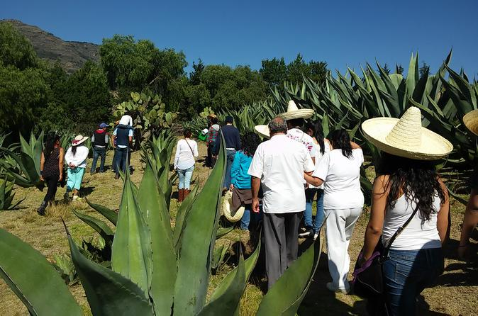 Pulque Ranch Day Trip in Tepotzotlan