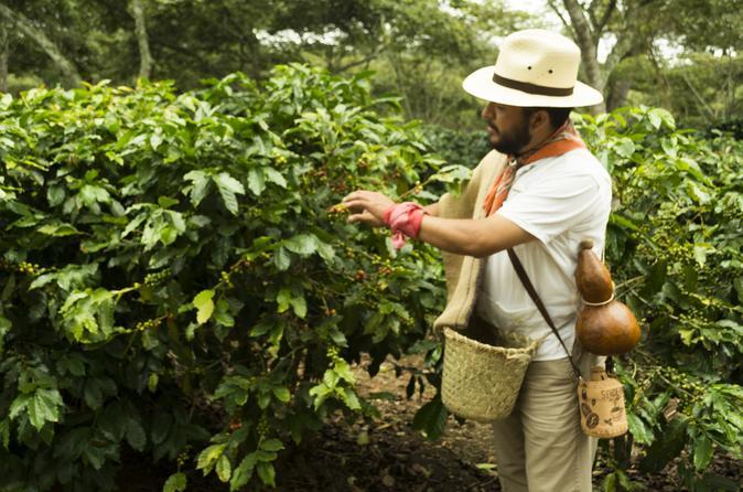 Enjoy The Coffee Trails In Coatepec Magical Town - Veracruz