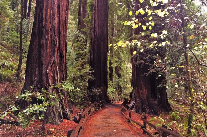 Private Full-Day Muir Woods and Wine Country Tour From San Francisco