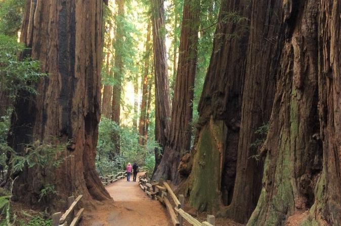 Private Tour to Muir Woods and Sausalito