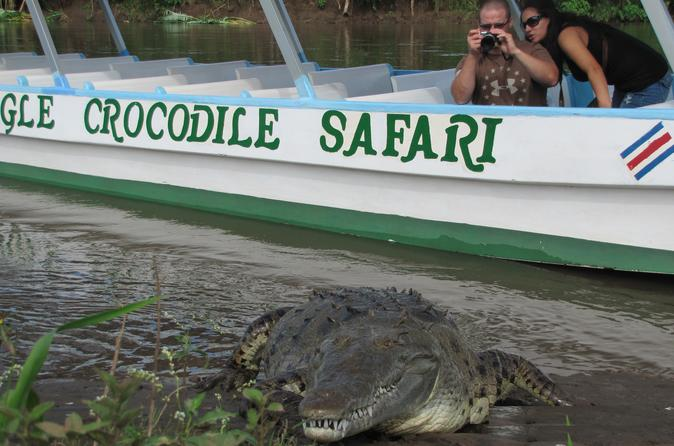 Rainforest Aerial Tram and Crocodile Day Tour from San José