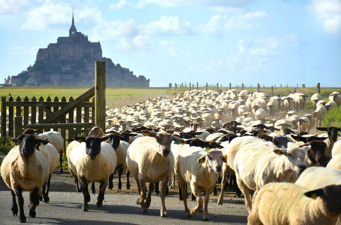 Mont Saint-Michel Private Walking Tour of Mont Saint Michel and Surroundings France, Europe