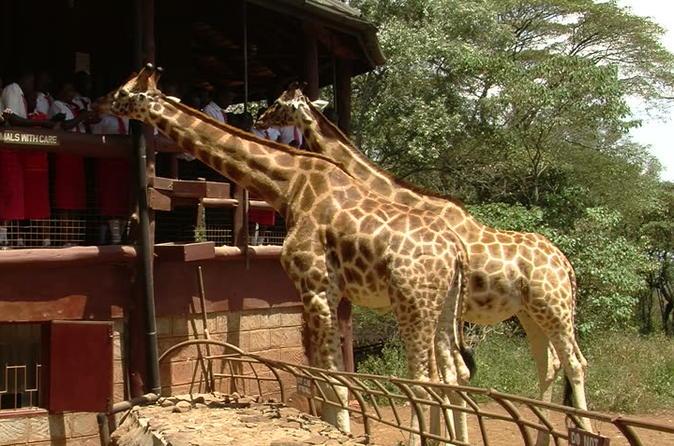 Nairobi National Park,David Shedrick,Carnivore lunch&Giraffe centre Private tour