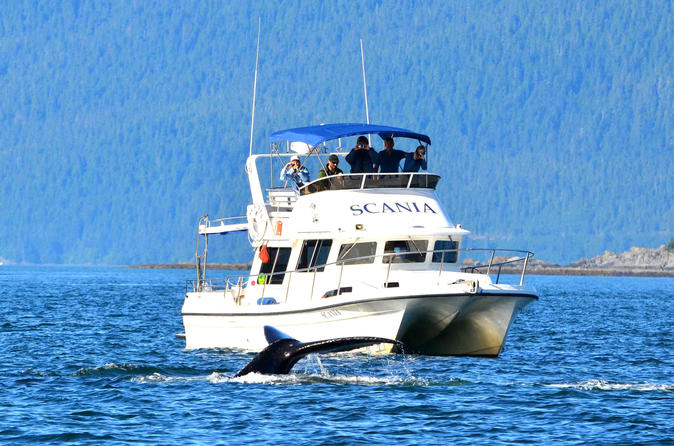 Private, personal Whale-watching