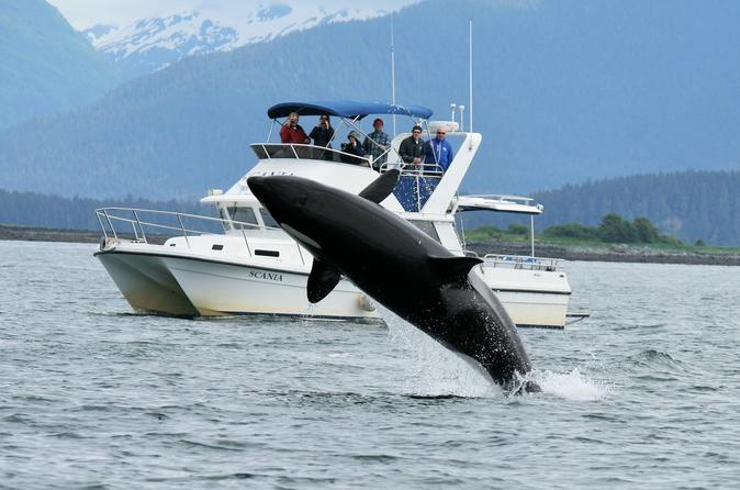 Private whale-watching tour including lunch and Mendenhall Glacier drop off