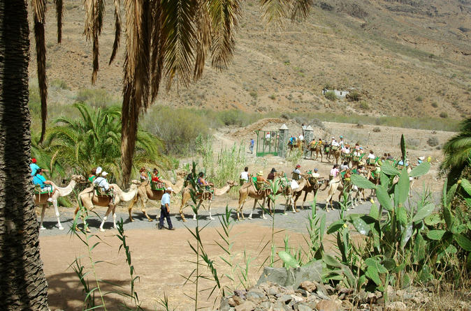 Camel Ride In Fataga With BBQ - Gran Canaria