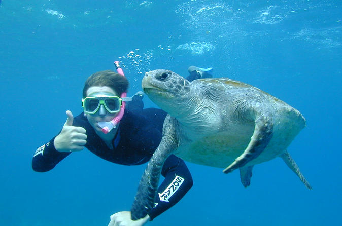 Byron Bay Sea Turtle Snorkel Tour Australia, Pacific Ocean and Australia