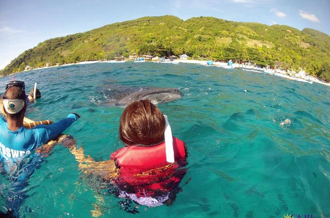 Private tour whale shark snorkeling in sumilon island from cebu in cebu city 380583