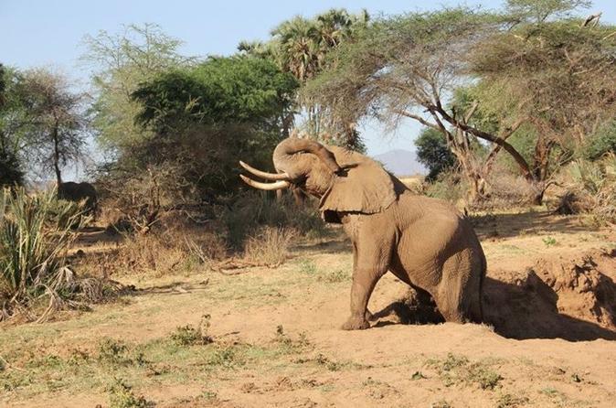 2-Day Amboseli National Park Tour from Nairobi