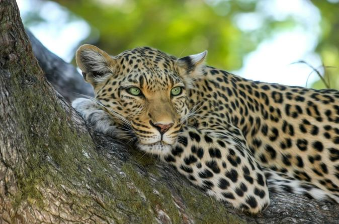 2-Day Tsavo East National Park Tour from Mombasa