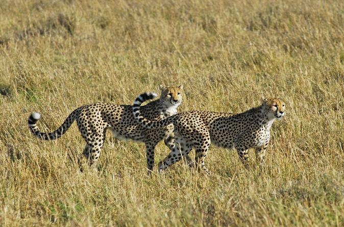 Day Trip to Nakuru National Park from Nairobi