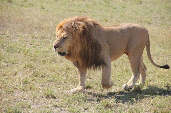 Full-Day Sweetwaters and Ol Pejeta Conservancy Tour from Nairobi