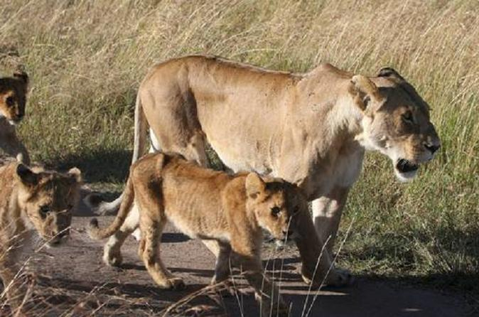 Full day Tour with visit to Nairobi National Park- Lunch at Carnivore Restaurant and Bomas of Kenya Cultural Centre