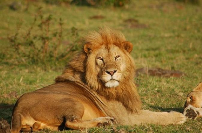 Half-Day Nairobi National Park Guided Tour