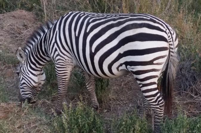 Half-Day Nairobi National Park Tour