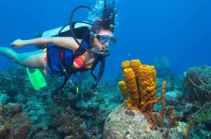 Wave Break Island Scuba Diving on the Gold Coast