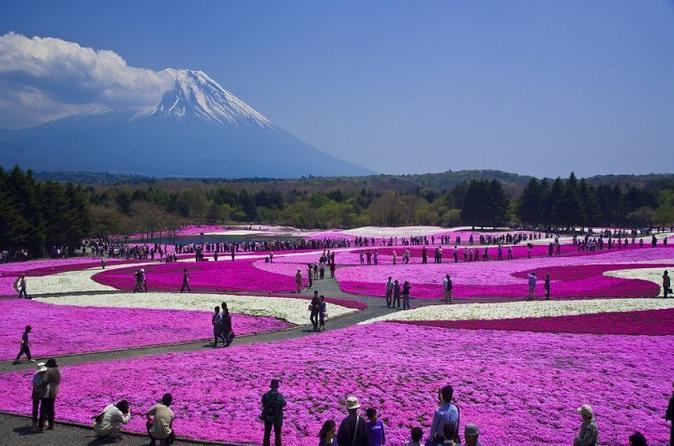 Excursão para o Pink Moss Phlox Festival e Monte Fuji, incluindo colheita de morangos