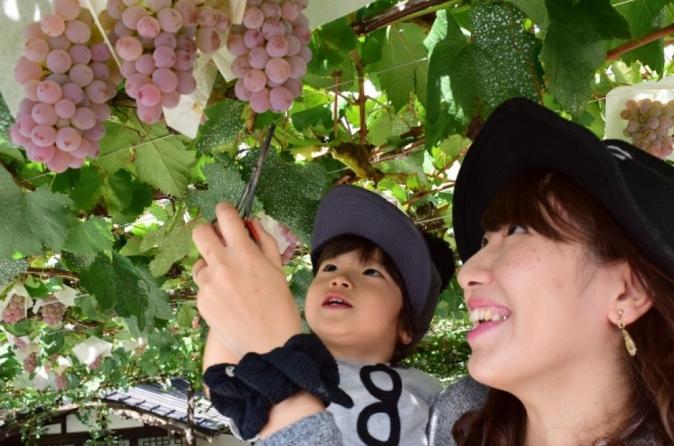 Mt. Fuji 5th Station, Lake Kawaguchi, and Seasonal Fruit Picking from Tokyo