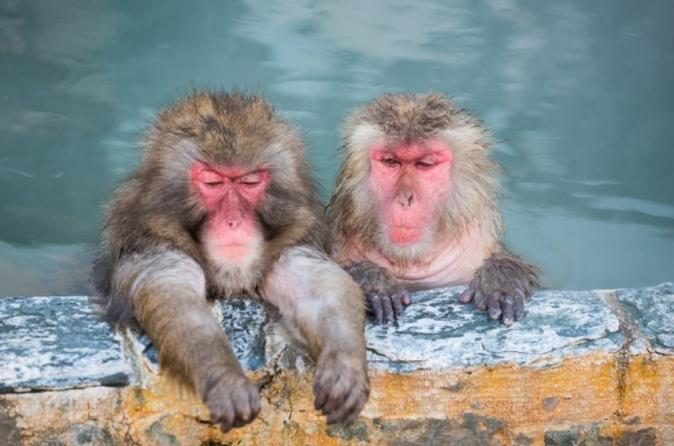 Seasonal Snow Monkey Day Trip