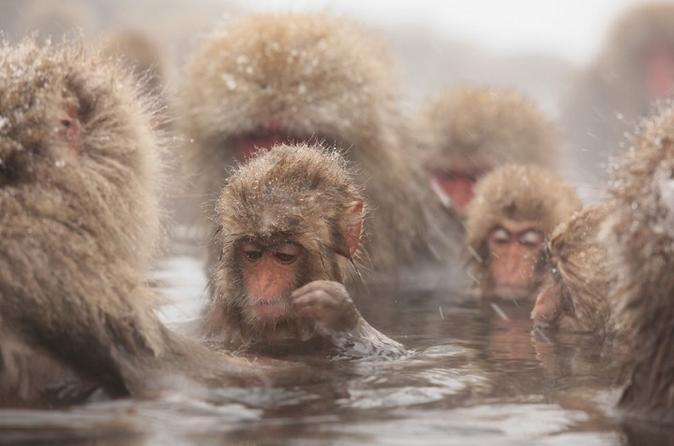Viagem diurna sazonal com observação dos macacos-japoneses, incluindo almoço com sukiyaki