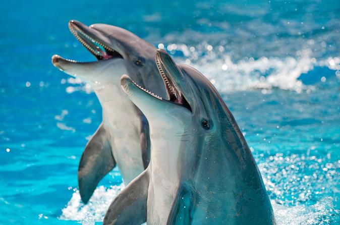 Private Dolphin Cruises In Orange Beach - Gulf Shores