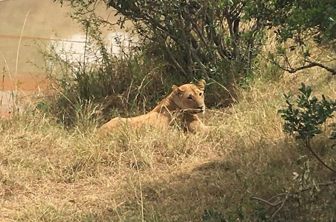 Nakuru National Park Day Tour from Nairobi and Naivasha