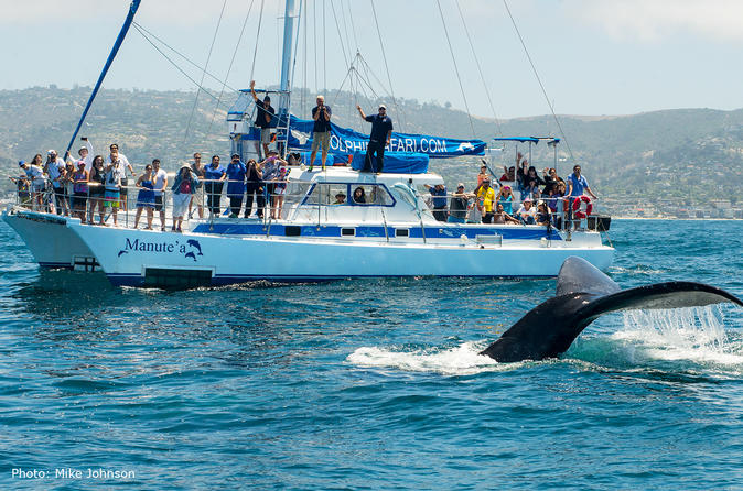 Dana point whale watching and dolphin watching eco safari in dana point 401598
