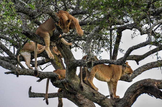 12Days Best of Kenya and Tanzania Wildlife Safari